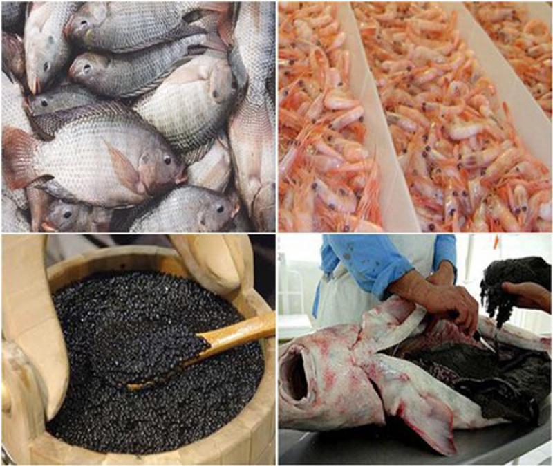 نمایشگاه دام و طیور، شیلات، آبزیان و جشنواره غذاهای دریایی بوشهر 98