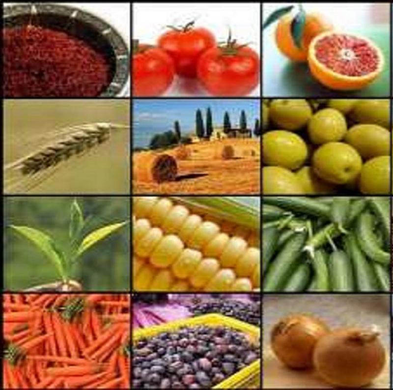 نمایشگاه صنایع غذایی و کشاورزی بیرجند 98